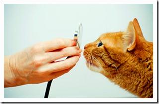 veterinário holístico