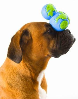 Clique na imagem para conhecer um site de brinquedos ecológicos para cães.