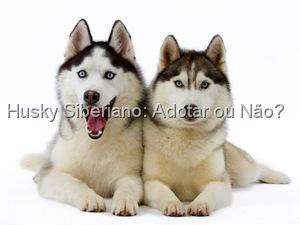 Guia de raças no Mãe de Cachorro: Husky Siberiano