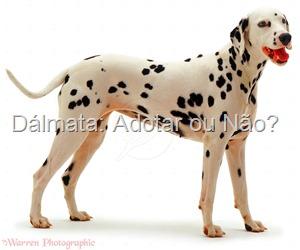 Guia de raças Mãe de Cachorro: Dálmata